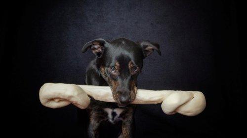 So undankbar verhalten sich Hunde gegenüber uns Menschen