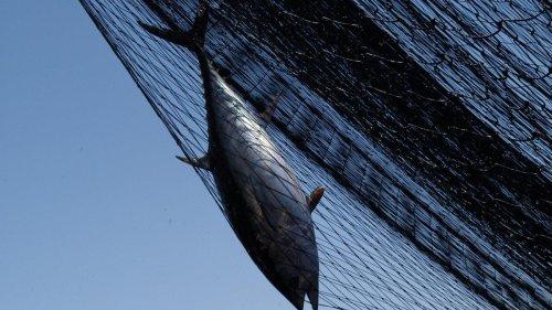 Was Fischkot mit dem Klimawandel zu tun hat
