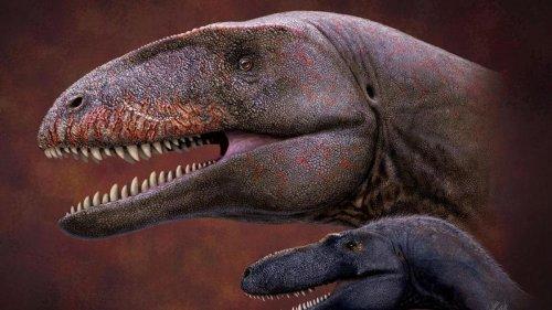 Dieser neu entdeckte Raubsaurier war der wahre König der Dinos
