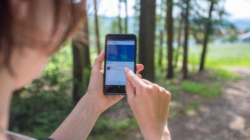 Mit diesen Natur-Apps bestimmen Sie Vögel und Pflanzen