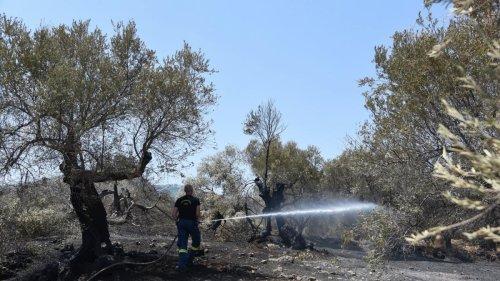 Extreme Hitze in Griechenland dauert an - Brandgefahr sehr groß