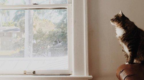 Nylonstrumpfhose und Kaffeefilter – so werden Fenster sauber