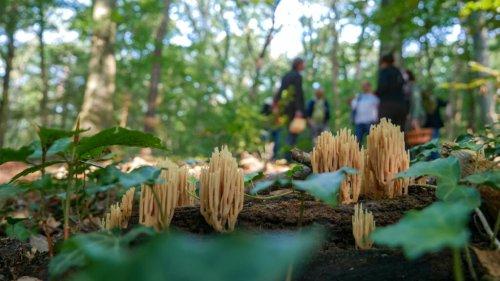 Pilze sammeln, aber richtig – mit dem Experten im Bergischen Land