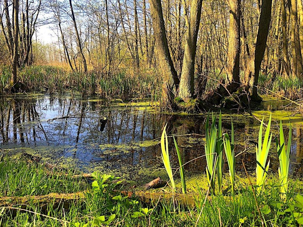 Natur-Rausch im Hinterland von Usedom