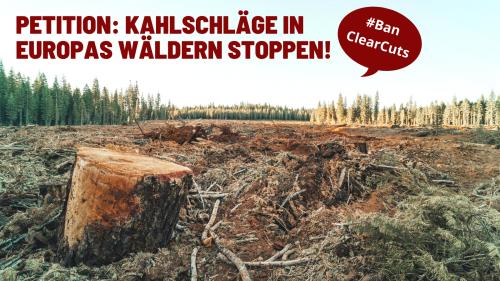 Kahlschläge in Europas Wäldern stoppen!