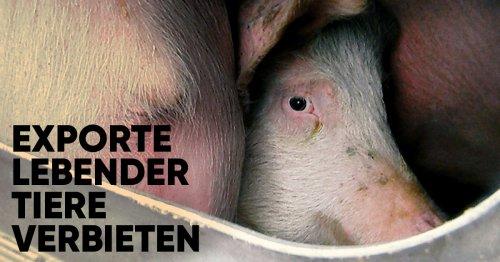 Exporte lebender Tiere verbieten