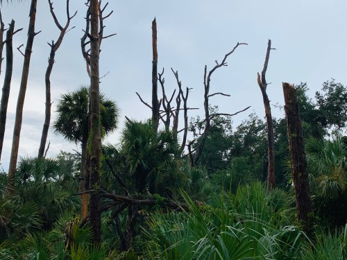 LIVE RADAR: Tornado spotted in New Smyrna Beach as severe storms roll through Central Florida