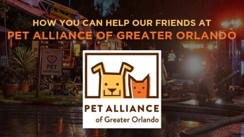 Calling all animal lovers: Here's how you can help Pet Alliance of Greater Orlando on Giving Day