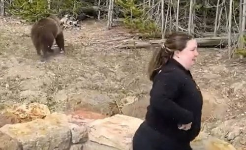Remember The Moron That Almost Got Mauled By A Yellowstone Grizzly Bear? Park Rangers Are Looking For Her