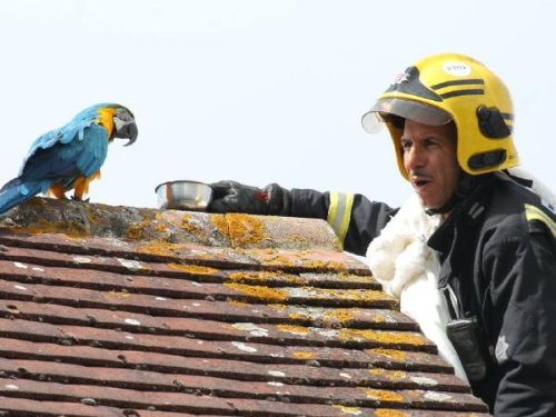 Stranded Parrot Goes Viral For Telling Firefighter To F*ck Off When He Tried To Rescue It