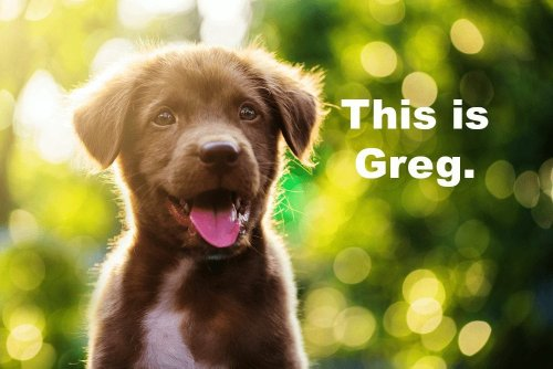 The 10 Best Human Dog Names