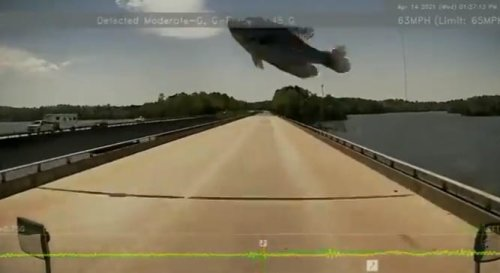 North Carolina Trucker Gets Wild Surprise When A Fish Comes Crashing Into His Windshield