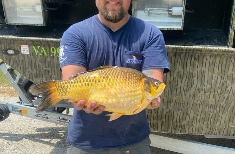 Two Monster Goldfish Recently Caught In Virginia And Missouri