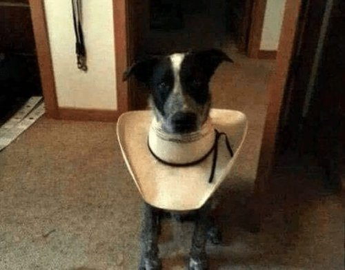 """Redneck Genius Tells Vet To Shove It, Makes His Own """"Cone of Shame"""" From Cowboy Hat"""
