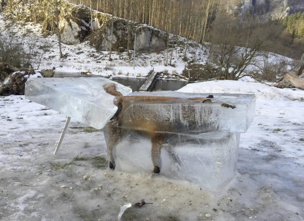 Hunter Shares Crazy Photo Of Frozen Fox As Warning To Others