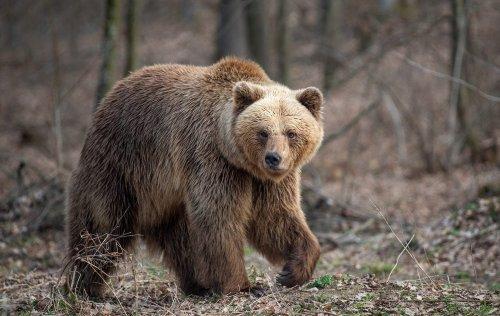 """Alaska Man Survives Vicious Brown Bear Attack: """"Crushed My Right Cheek"""""""