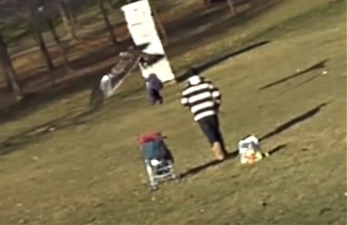 VIDEO: Enormous Golden Eagles Snatches Kid, Takes Off With Him, In Front Of Oblivious Dad
