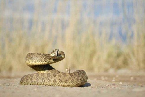 Best Guns for Snakes: 4 Close-Range, Power-Appropriate Picks