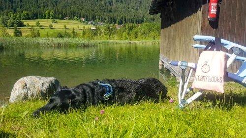 Camping mit Hund in Österreich: Das sind die hundefreundlichen Campingplätze!