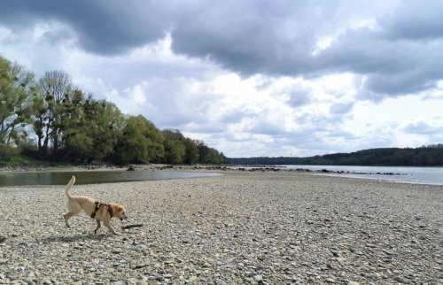 Durch die Donauauen: Wandern im Nationalpark Paradies