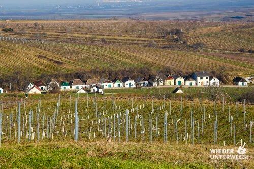 Hundschupfen und Hochlüssen: Weinwandern im Mailberg Valley