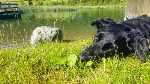 Camping mit Hund in Österreich: Hundefreundliche Campingplätze im Überblick