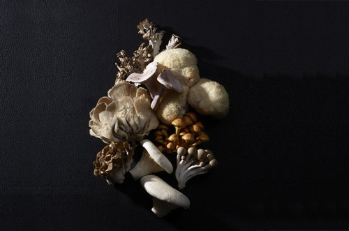 Magical Mushroom Pairings