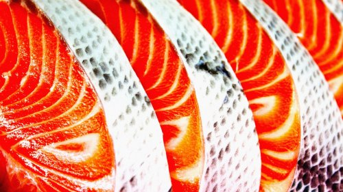 The race to stop fish becoming the next factory farming nightmare