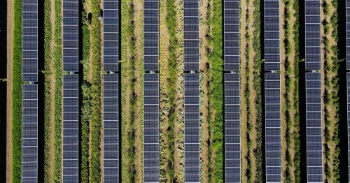 Growing Crops Under Solar Panels? Now There's a Bright Idea