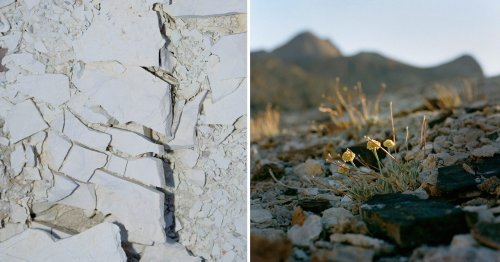 The Lithium Mine Versus the Wildflower