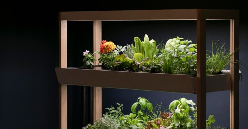 Want to Grow Your Own Food? Try a Hydroponic Garden