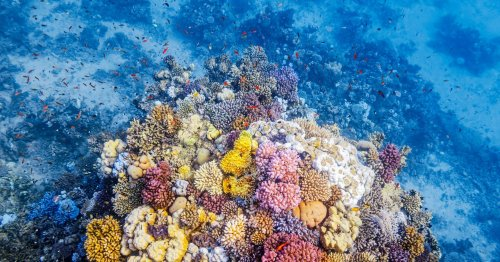 This Evolutionary Gift May Protect Coral From Climate Change