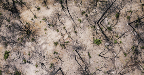 Drones May Help Replant Forests—If Enough Seeds Take Root