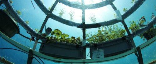 Com'è fare agricoltura sott'acqua?