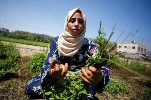 Powering the local economy, Gaza women create cosmetics from local herbs