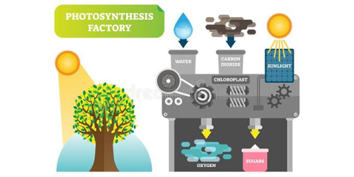 Soaking up the sun: Artificial photosynthesis promises clean, sustainable source of energy