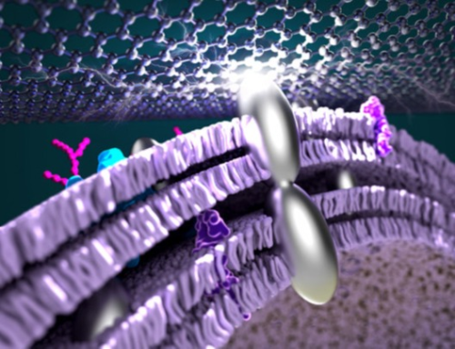 Researchers infuse bacteria with silver to improve power efficiency in fuel cells