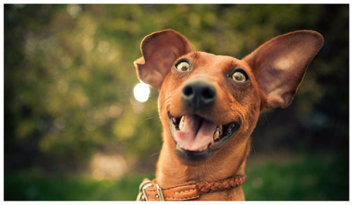Is your dog strangely hyperactive or impulsive? New study shows why