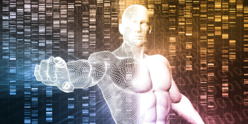 New study shows how to boost muscle regeneration and rebuild tissue