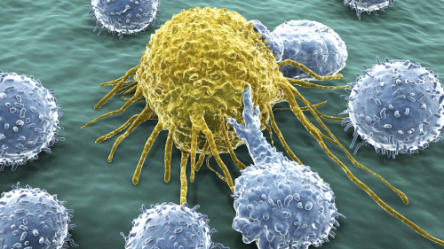 Can white blood cells destroy cancer cells? The answer may surprise you