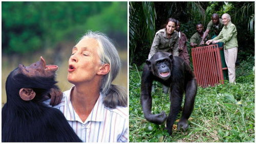 Jane Goodall Awarded for Lifetime of Service to Animals at Star-Studded Gala