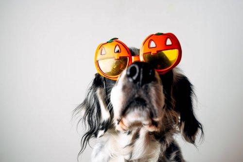 Hundekostüme für Halloween: So lernt dein Vierbeiner anderen das Fürchten