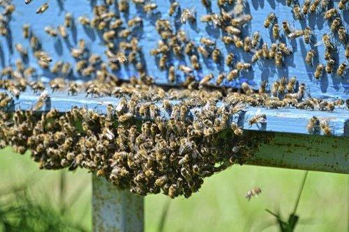 Honig oder kein Honig?