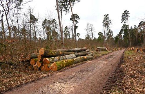Müssen in Jockgrim für ein neues Feuerwehrhaus ca. 7000 qm Wald gerodet werden?