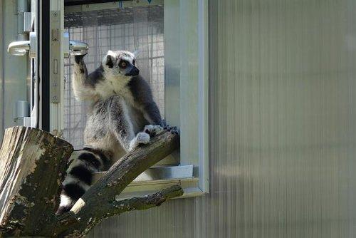 Zoo, Sportvereine und freie Kulturszene bangen um ihre Zukunft