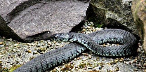 Schlange sucht das Weite