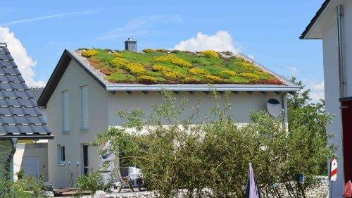 Dachbegrünung: Vorteile und Nachteile von Gründächern