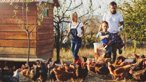 Hühner halten im Garten: Alle Tipps & Infos zur privaten Hühnerhaltung