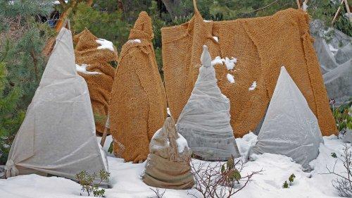Winterschutz für Pflanzen: So schützt ihr eure Pflanzen vor Frost