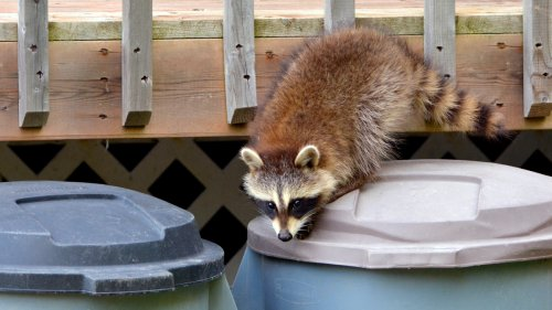 5 Easy Expert Tips to Critter-Proof Your Yard and Home